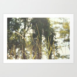 meadow. Art Print