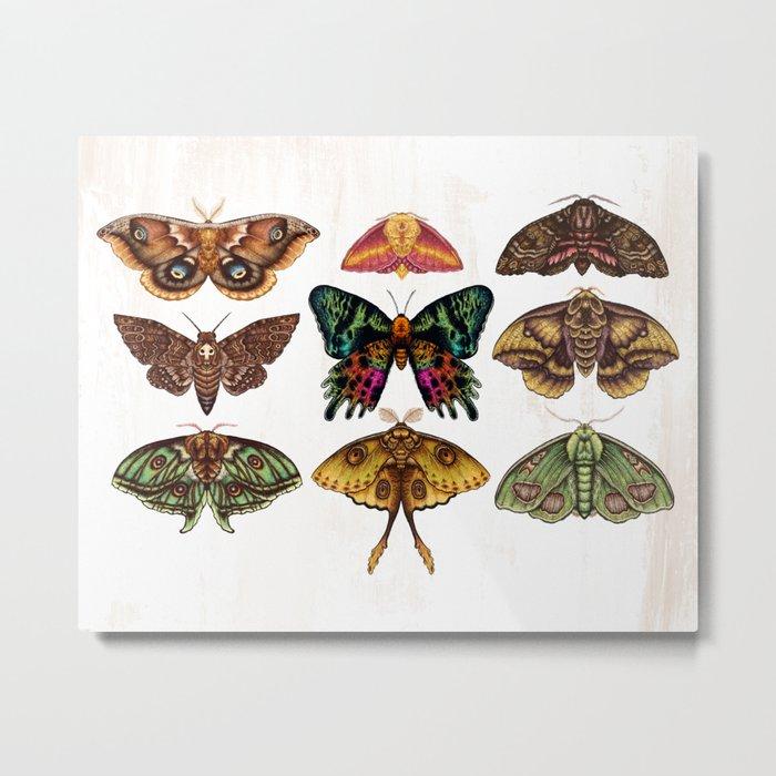 Moth Wings III Metal Print