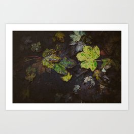 Winter Leaves Art Print