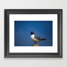 Laughing Gull Framed Art Print