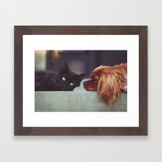 CAT - DOG - LYING - DOWN - ANIMALS - FRIENDS - PHOTOGRAPHY Framed Art Print