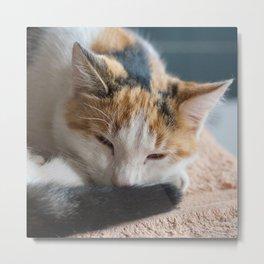 dozing tri-colored calico cat Metal Print