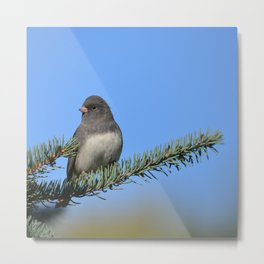 Backyard Beauty Metal Print