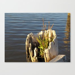 Life Will Find a Way Canvas Print