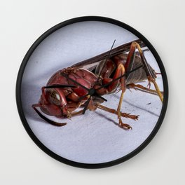 Wasp on a Bender Wall Clock