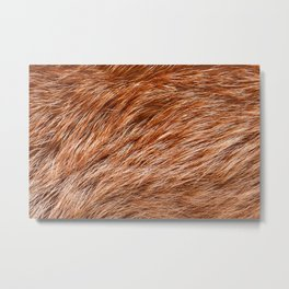 Red fox rough fur texture cloth abstract Metal Print