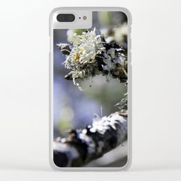 A tuft of moss on a Birch tree Clear iPhone Case