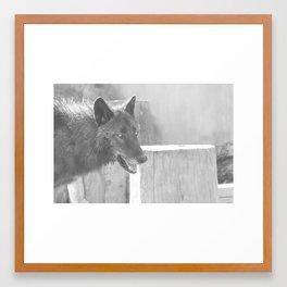 Beo Wolf 4 Framed Art Print