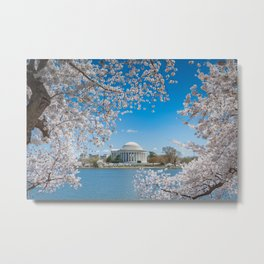 Jefferson Memorial under Cherry Blossoms Metal Print