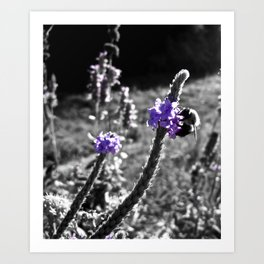 Purple Honey Art Print