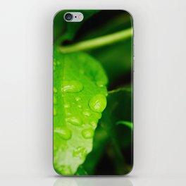 Catching raindrops iPhone Skin