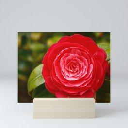 Camellia japonica Mini Art Print