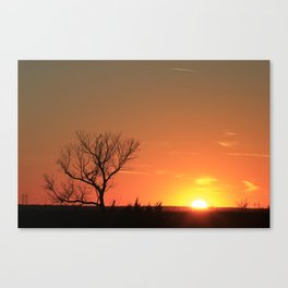 Kansas Golden Sunset with a tree Silhouette. Canvas Print