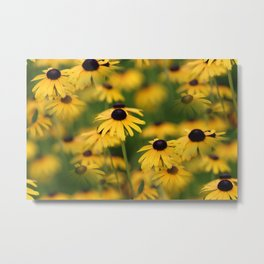 Field of Susans Metal Print