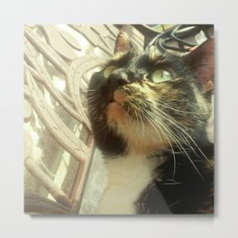 The Friendly Stray Metal Print