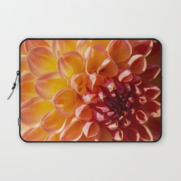 A Fiery colored Dahlia (Asteraceae) shines in the morning sun Laptop Sleeve