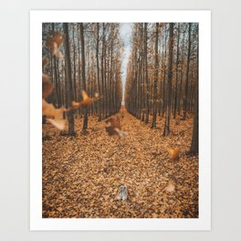 The Perfect Autumn Forest Art Print