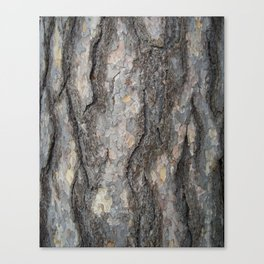 pine tree bark - scale pattern Canvas Print