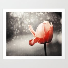 Red Tulip Flower Photography, Coral Tulips Brown Grey Black Nature Photograph Art Print