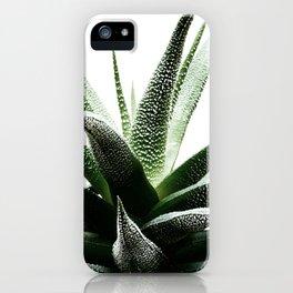 Succulents - Haworthia attenuata - Plant Lover - Botanic Specimens delivering a fresh perspective iPhone Case