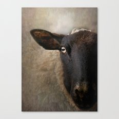In a sheep's eye Canvas Print