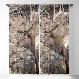 Watercolor Elk Bull 43, Coy Blackout Curtain