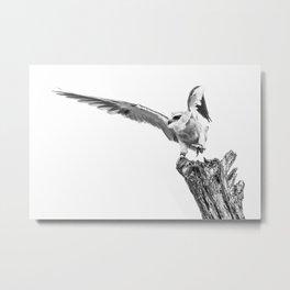Dancing Kite Metal Print