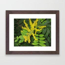 pic 003 Framed Art Print