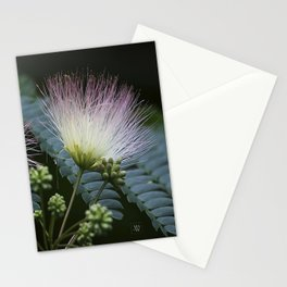 Mimosa Blossoms Stationery Cards