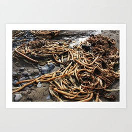 From the sea Art Print