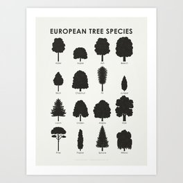 Infographic Guide for Tree Species by Shapes or Silhouette Art Print