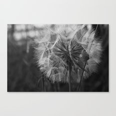 A Wish... Canvas Print