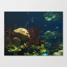 In  the Aquarium Canvas Print