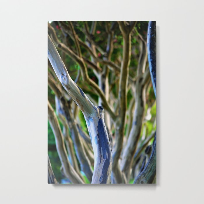 Crepe Myrtle Tree Branches Metal Print