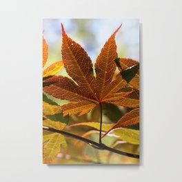 Japanese Maple Leaf Metal Print