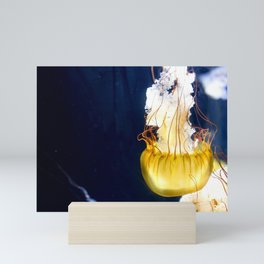 Pacific Sea Nettle Jellyfish Photo artwork Mini Art Print