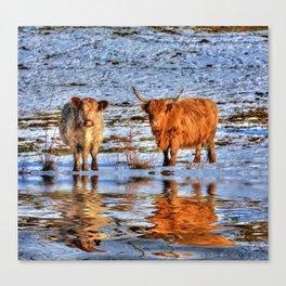 Sarah & Hamish - Highland Cattle Canvas Print