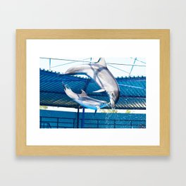 Dolphins jumping out of water on show Framed Art Print