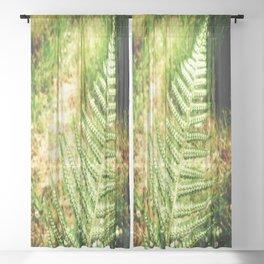 Green Fern Sheer Curtain