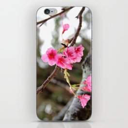 In full bloom iPhone Skin