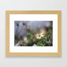 Flower. Framed Art Print