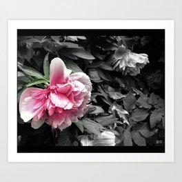flower petunias Art Print