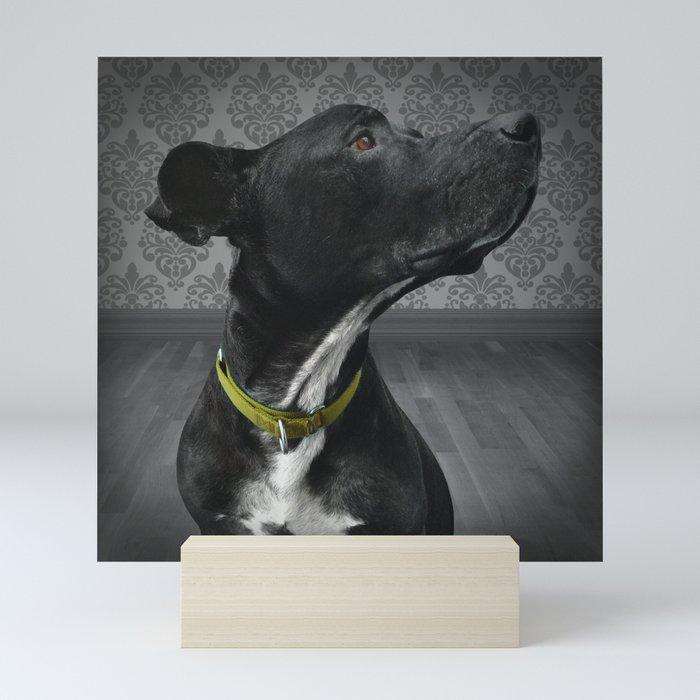 COBY (shelter pup) Mini Art Print