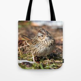 Staredown with a Lincoln's Sparrow Tote Bag