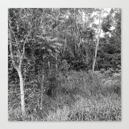 The Forest in Monochrome Canvas Print