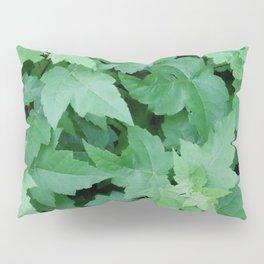 Settled Pillow Sham