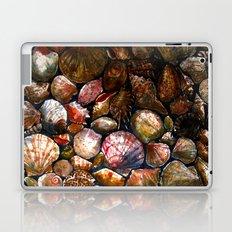 Shell 1 Laptop & iPad Skin