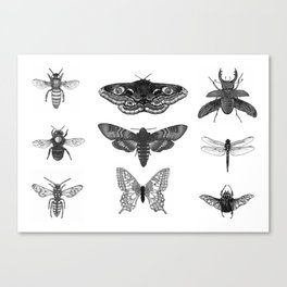 Insect Illustration Collection Canvas Print