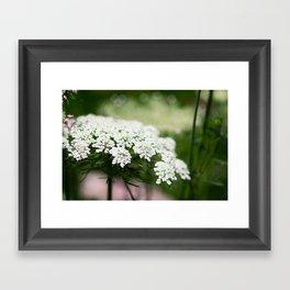 White Queen Ann's Lace Framed Art Print