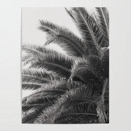 Palm Tree Majesty Poster
